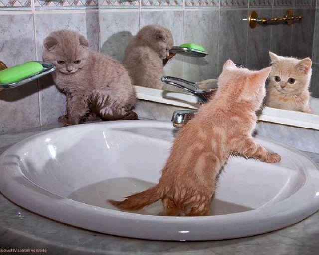 Можно ли мыть кошку шампунем для собак?