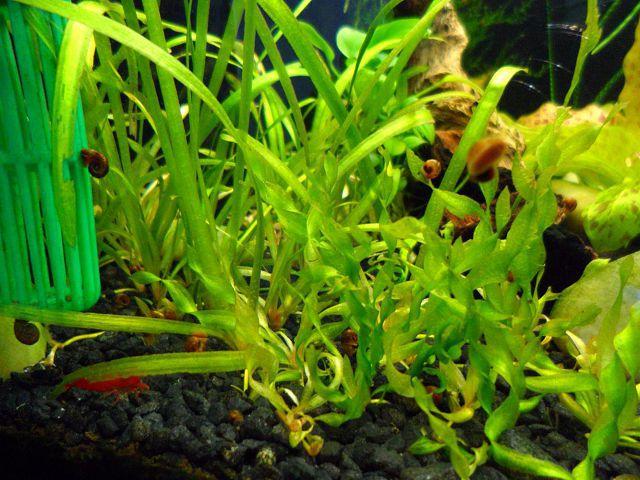 Неприхотливые растения для маленького аквариума.