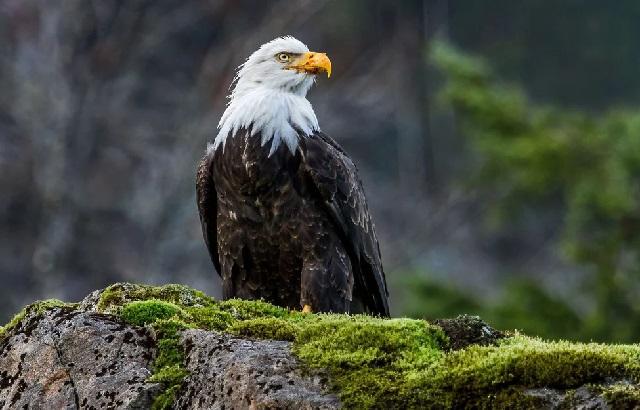 Птицы, встреч с которыми следует избегать: опасно!
