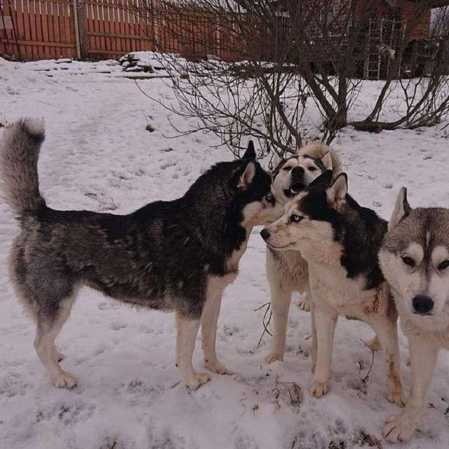 Почему собака линяет зимой и чего ей не хватает?