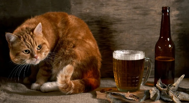 Самые опасные продукты для котов.