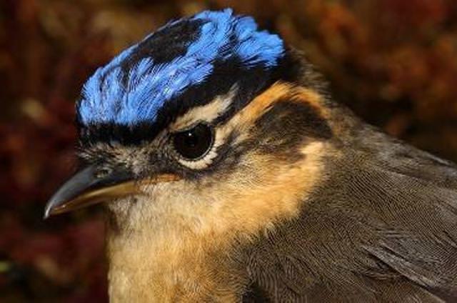 Опасные птицы, встреч с которыми следует избегать: опасно!