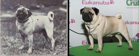 Какизменились породы собак за 100 лет?
