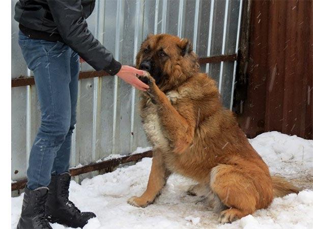 Интеллектуальные способности у собаки и способы развить.