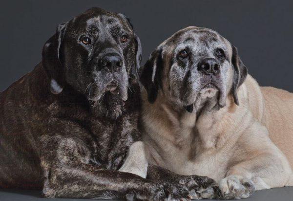 Болезнь Альцгеймера у собак симптомы и лечение.