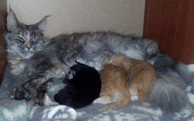 Что будет с котёнком, если разлучить его с мамой-кошкой слишком рано?