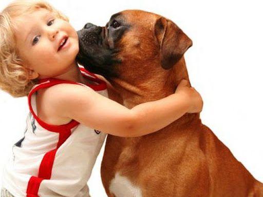 Домашние животные для детей дошкольного возраста.