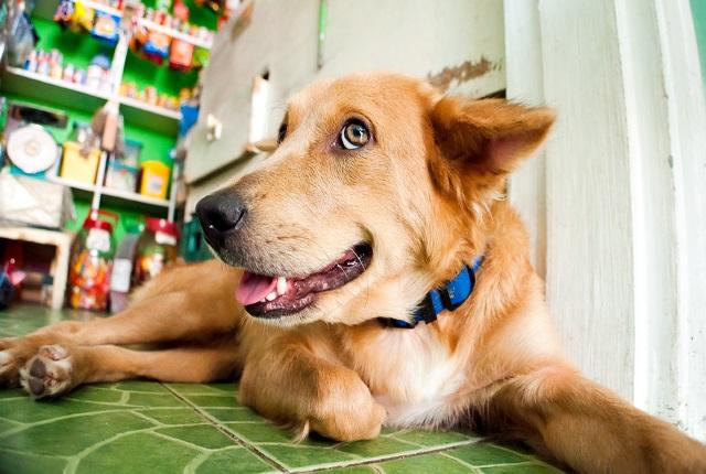 Как оказать первую помощь собаке после ДТП