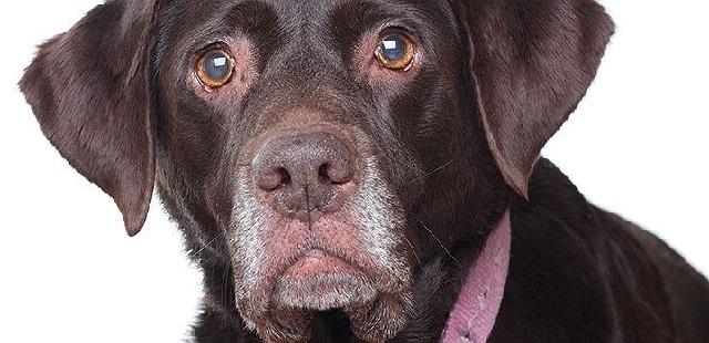 Как определить возраст собаки по зубам, шерсти и активности.