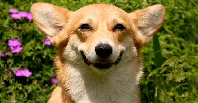 Как ухаживать за собакой весной и на что обратить внимание.