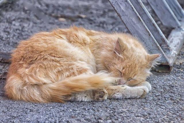 Как избавиться от соседского кота или бездомного?