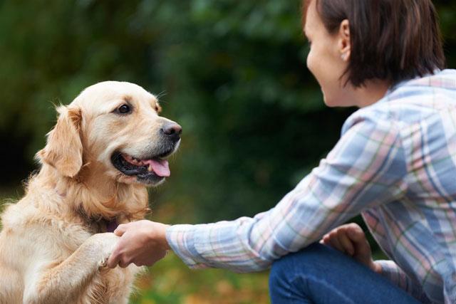 Какие болезни хозяев могут чувствовать собаки?