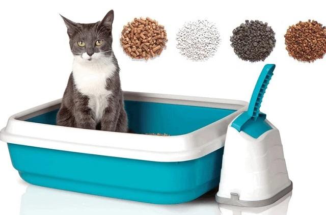 Какой наполнитель для туалета кошки лучше впитывает запах?