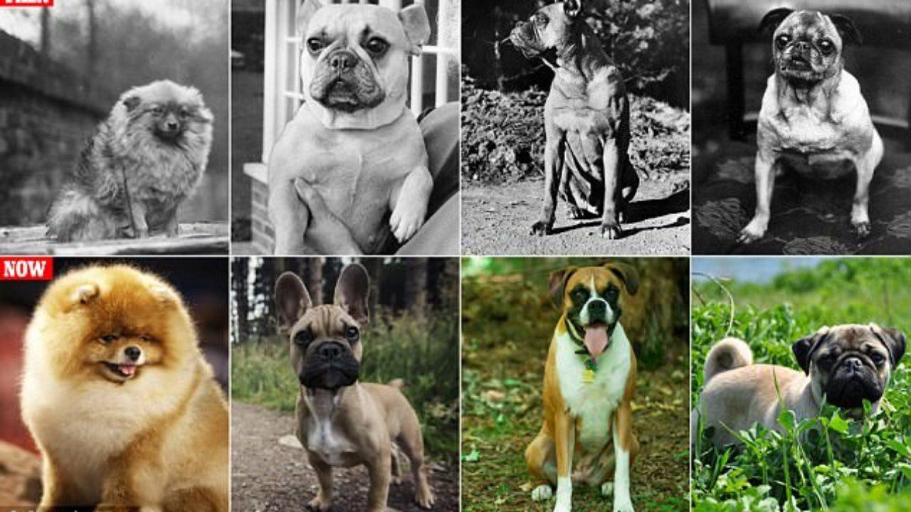 Как изменились породы собак за последние годы.