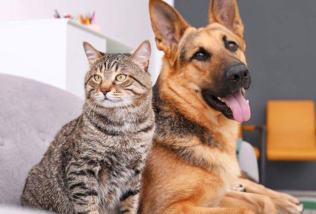 Коронавирус у животных кошек и собак.