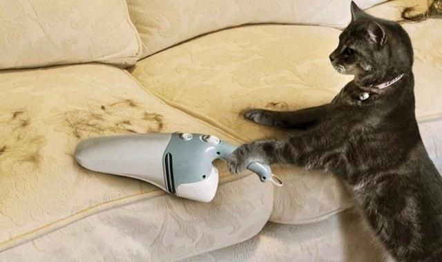 Кот метит в доме – что делать, как отучить и убрать запах.