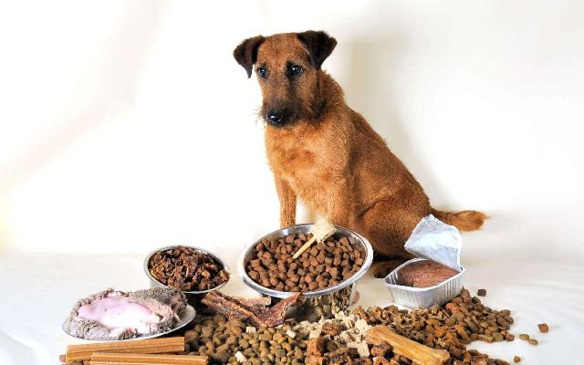 Необычные ингредиенты в корме для собак.