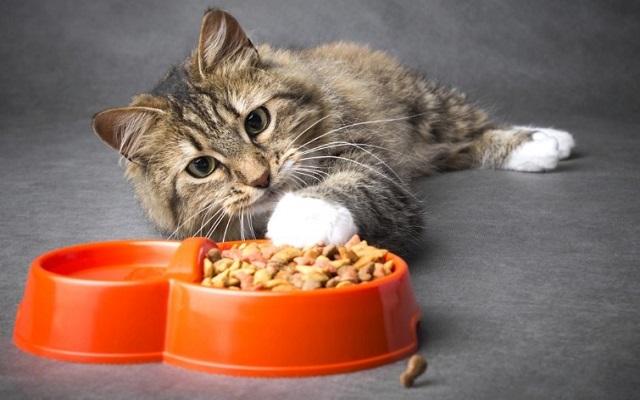Почему кот закапывает миску с едой дома после еды и можно ли его отучить?