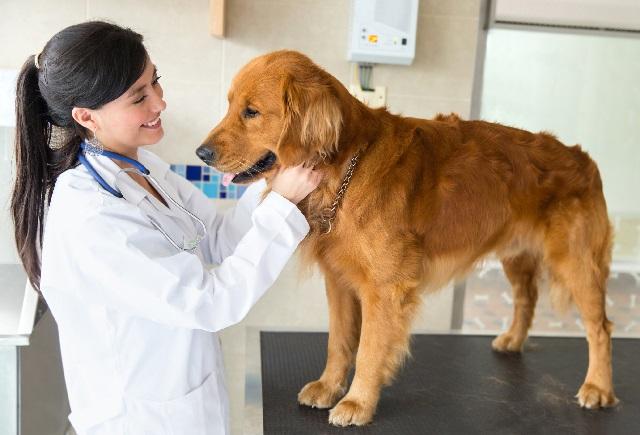 Помогает ли стерилизация собаки решить проблемы поведения?