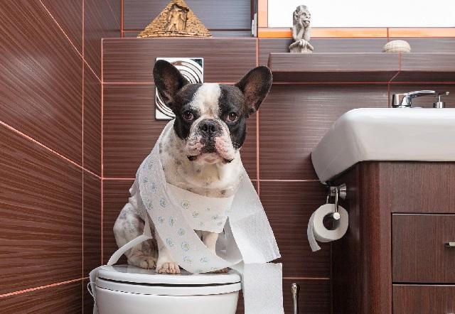 Диарея у собак лечение в домашних условиях.