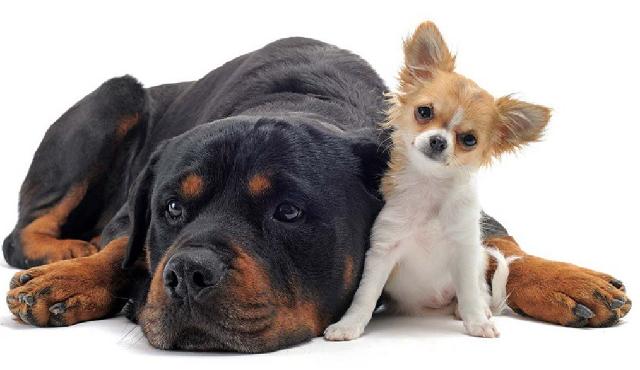 Самые миниатюрные породы собак с фото и описанием ТОП-10.