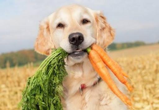 Витамины для собаки список.