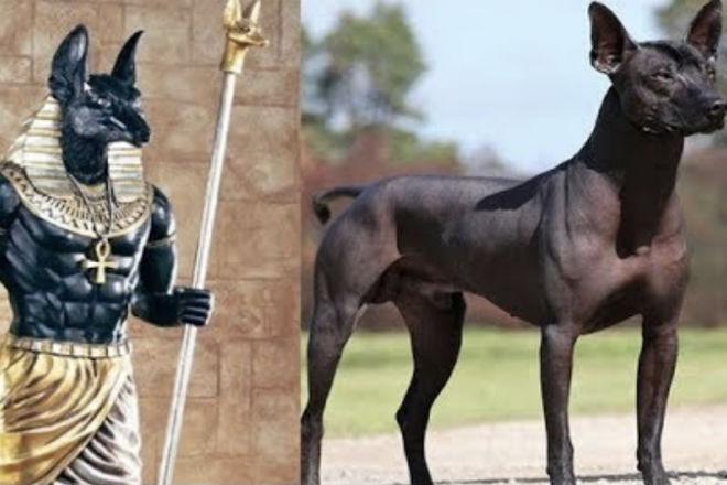 Древнейшие породы собак