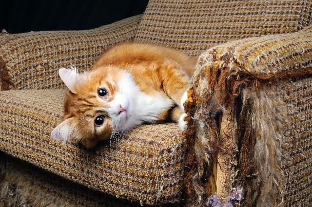 Кошка царапает мебель – что делать и как отучить?