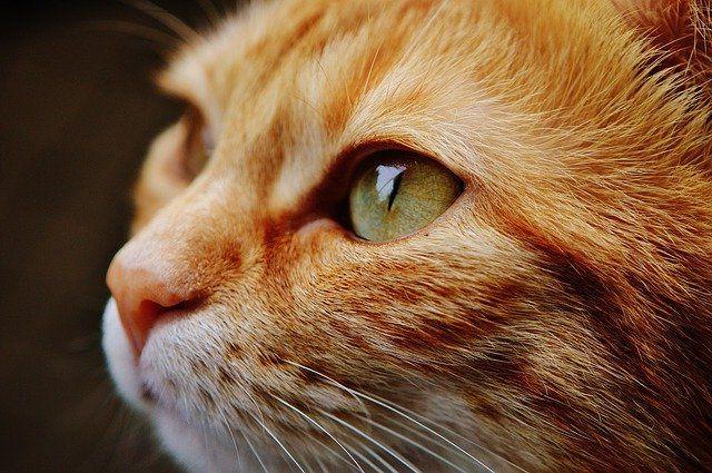 Почему кошки не любят полупустые миски?