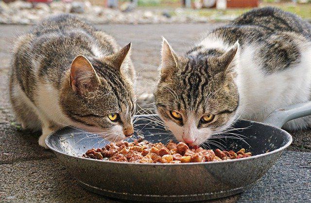 Кормление кошек.