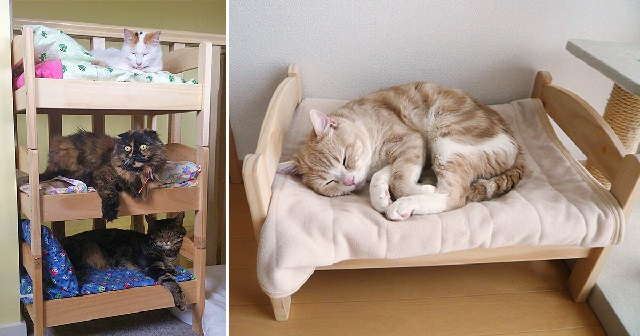 Почему кот не хочет спать в своей лежанке?