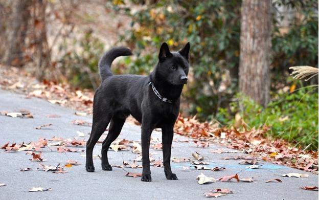 Самые редкие породы собак в мире.