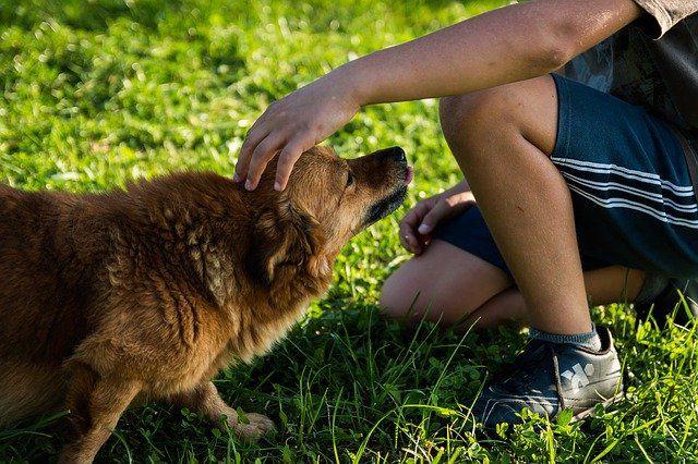 Как отучить собаку лаять дома?