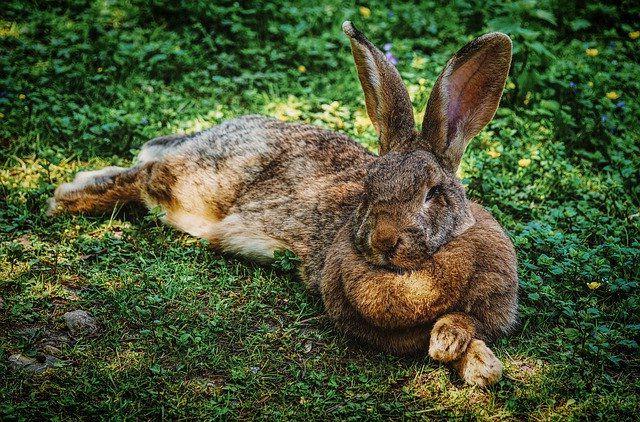 Каких животных можно разводить в домашних условиях для заработка.