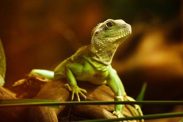 Питомцы в офисе: рептилии.