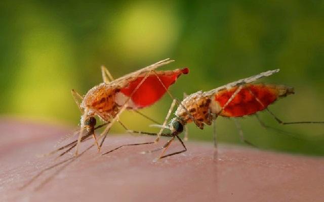 Действенные народные средства от комариных укусов.