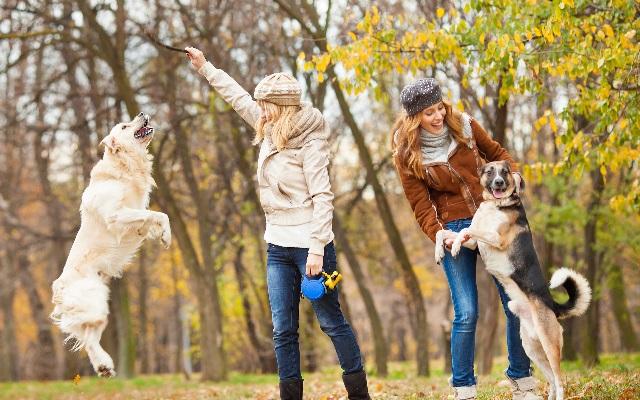 Как гулять с собакой правильно, чтобы она активно работала.