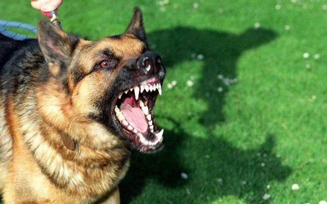 Коррекция поведения собак, если они не дружат и огрызаются друг на друга.