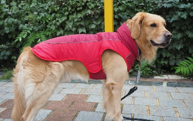 Одежда для собак и обувь для городских питомцев.