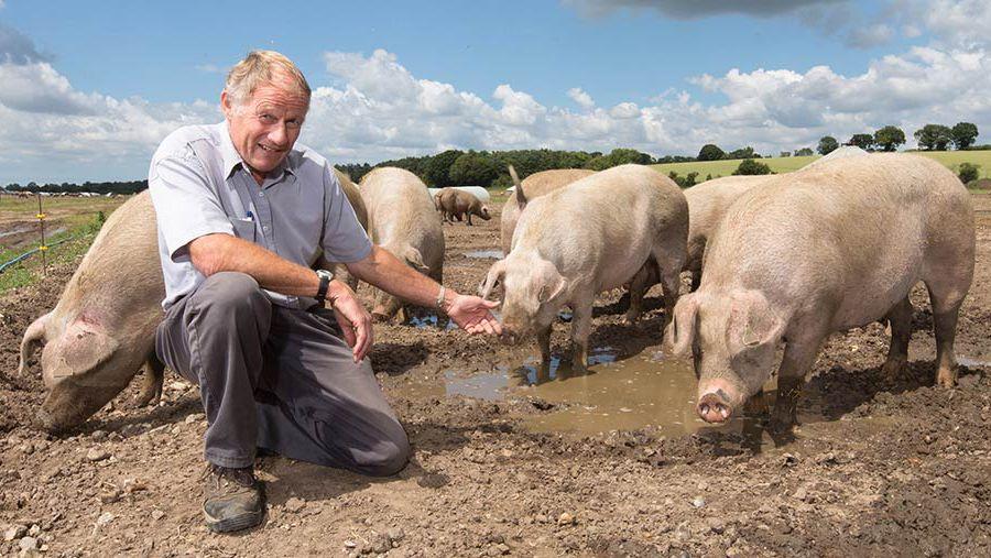 Кормление свиней в домашних условиях в вопросах и ответах.