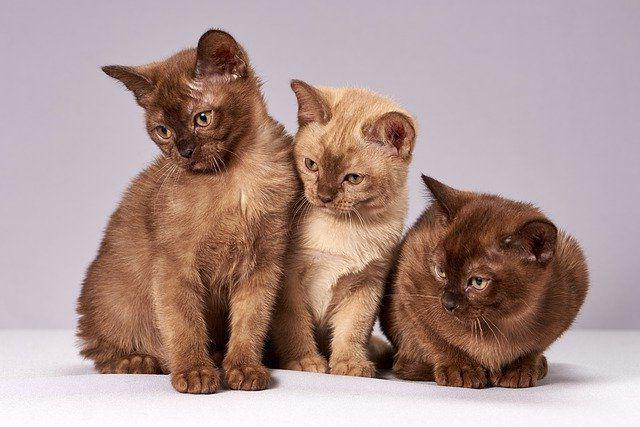 Котята фото.