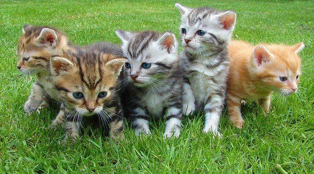 Необходимое приданое для котенка список и советы.