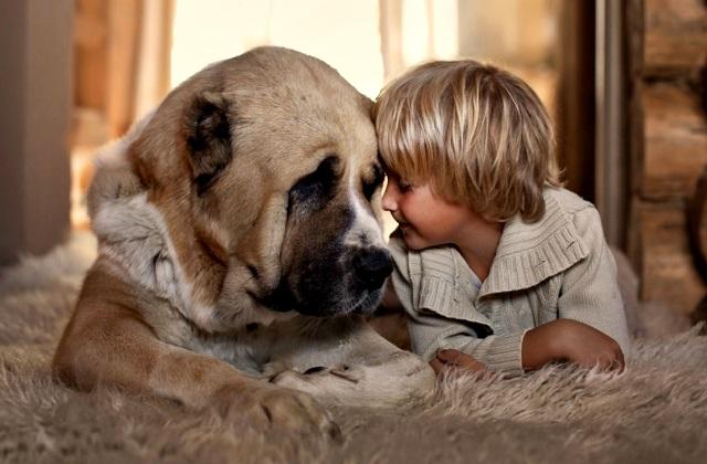 Собака и ребенок в доме вред или польза и как их подружить.
