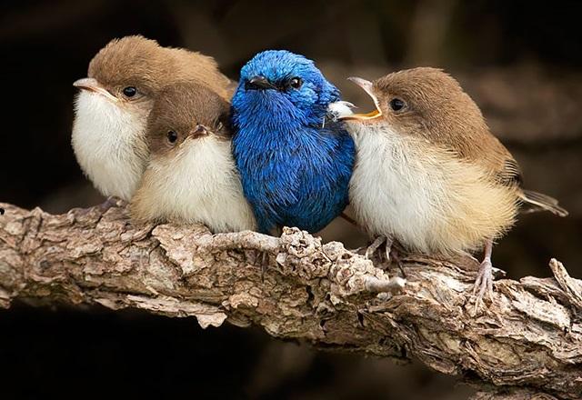 Почему птиц называют теплокровными животными?