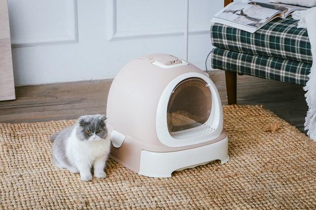 Закрытый туалет для кошек лоток с бортами или домик?