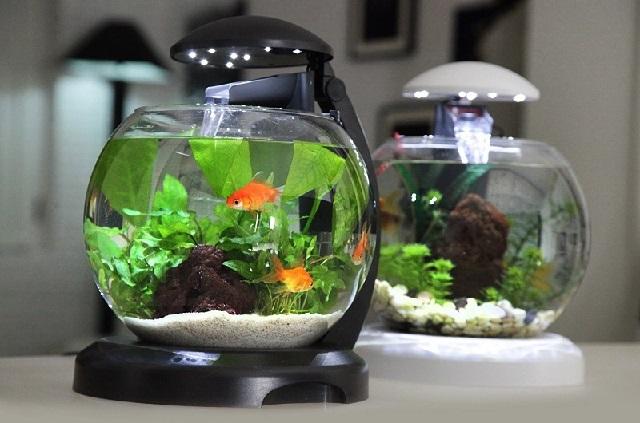 Маленький аквариум с одной или двумя рыбками.
