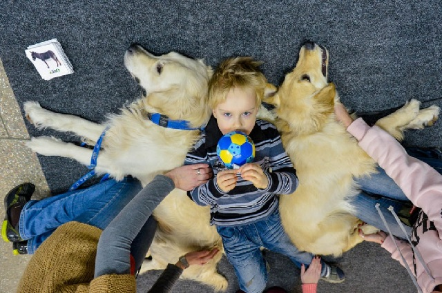 Собака вместо доктора или какие болезни лечат собаки.