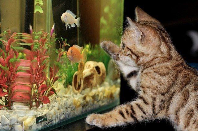 Уход за аквариумом и рыбками для начинающих.