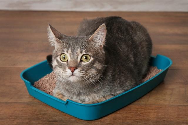 Наполнитель для кошачьих туалетов какой лучше выбрать?