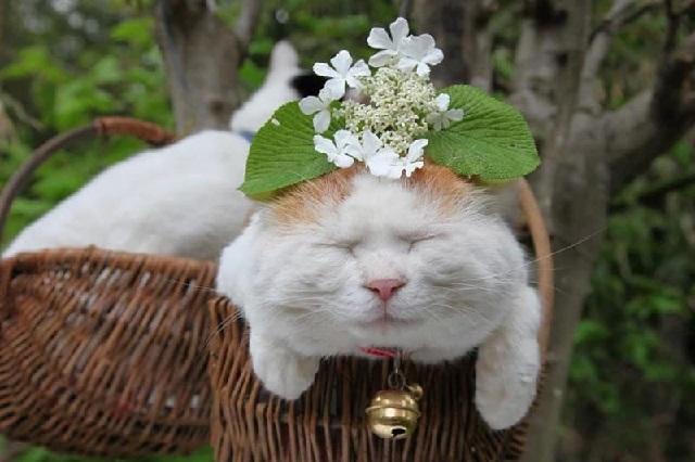 Невообразимая лень японского кота.
